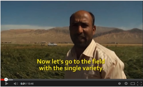Evolutionary Plant Breeding in Iran
